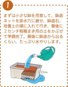 まずは小さな鉢を用意して、鉢底ネットを排水穴に被せ、鉢底石、培養土の順に入れて行き、最後に2センチ程種まき用の土をかぶせて準備完了。最後に鉢底から出るくらい、たっぷり水やりします。