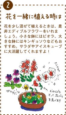 花を少し混ぜて植えるときは、是非エディブルフラワーをいれましょう。小さな鉢にはビオラ、大きな鉢にはキンギョソウなどもおすすめ。サラダやアイスキューブに大活躍してくれますよ!