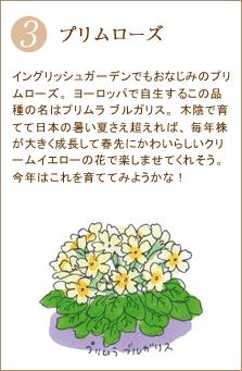 イングリッシュガーデンでもおなじみのプリムローズ。ヨーロッパで自生するこの品種の名はプリムラ ブルガリス。木陰で育てて日本の暑い夏さえ超えれば、毎年株が大きく成長して春先にかわいらしいクリームイエローの花で楽しませてくれそう。今年はこれを育ててみようかな!