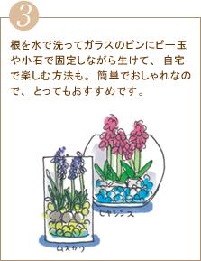根を水で洗ってガラスのビンにビー玉や小石で固定しながら生けて、自宅で楽しむ方法も。簡単でおしゃれなので、とってもおすすめです。