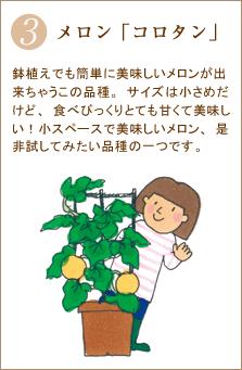 メロン「コロタン」鉢植えでも簡単に美味しいメロンが出来ちゃうこの品種。サイズは小さめだけど、食べびっくりとても甘くて美味しい!小スペースで美味しいメロン、是非試してみたい品種の一つです。
