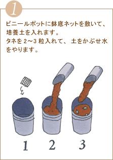 ビニールポットに鉢底ネットを敷いて、培養土を入れます。タネを2~3粒入れて、土をかぶせ水をやります。