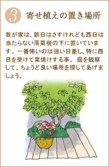 本葉が数枚出たら、大きめの鉢や地面に植えます。植え付ける際、化成肥料をすき込みます。(その後様子を見ながら適宜追肥します)朝顔はあんどん仕立て、ネットに這わせるなど環境を整えてから植え付けてね!