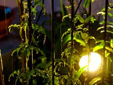 秋の庭を、ガーデンライトで演出