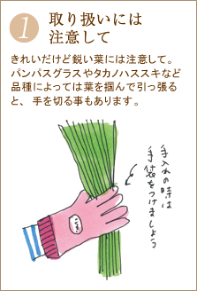 きれいだけど鋭い葉には注意して。パンパスグラスやタカノハススキなど品種によっては葉を掴んで引っ張ると、手を切る事もあります。