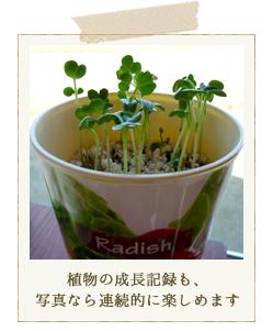 植物の成長記録も、写真なら連続的に楽しめます