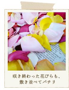 咲き終わった花びらも、敷き並べてパチリ