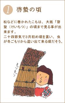 松などに巻かれたこもは、大抵「啓蟄(けいちつ)」の頃まで見る事が出来ます。二十四節気で3月初め頃を言い、虫が冬ごもりから這い出て来る頃だそう。
