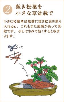 小さな和風草盆栽鉢に敷き松葉を取り入れると、これもまた風情があって素敵です。少しはさみで短くすると収まります。