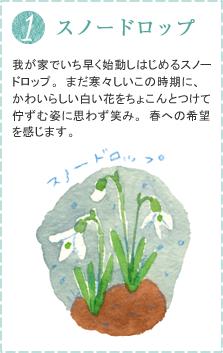 我が家でいち早く始動しはじめるスノードロップ。まだ寒々しいこの時期に、かわいらしい白い花をちょこんとつけて佇ずむ姿に思わず笑み。春への希望を感じます。