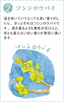道を歩いていてとっても良い香りがしたら、きっとそれはソシンロウバイです。透き通るような黄色の花びらと、何とも言えない甘い香りが寒空に漂います。