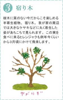 樹木に葉のない今だからこそ楽しめる半寄生植物、宿り木。我が家の周辺では大きなケヤキなどに丸く着生した姿があちこちで見られます。この実を食べに来るヒレンジャクも例年今くらいから3月頃にかけて飛来します。