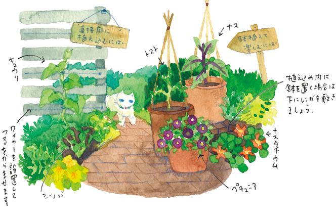 お庭で楽しむ家庭菜園