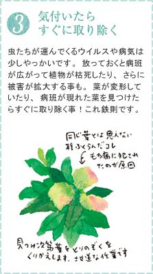 虫たちが運んでくるウイルスや病気は少しやっかいです。放っておくと病班が広がって植物が枯死したり、さらに被害が拡大する事も。葉が変形していたり、病班が現れた葉を見つけたらすぐに取り除く事!これ鉄則です。