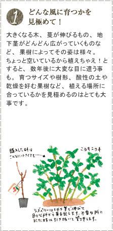 大きくなる木、蔓が伸びるもの、地下茎がどんどん広がっていくものなど、果樹によってその姿は様々。ちょっと空いているから植えちゃえ!とすると、数年後に大変な目に遭う事も。育つサイズや樹形、酸性の土や乾燥を好む果樹など、植える場所に合っているかを見極めるのはとても大事です。