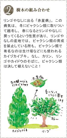 リンゴやなしに出る「赤星病」。この病気は、冬にビャクシン類に取りついて越冬し、春になるとリンゴやなしに戻ってくるという性質があり、リンゴやなしの産地では、ビャクシン類の育成を禁止している所も。ビャクシン類で有名なのは生け垣などにも使われるカイヅカイブキ。なし、カリン、リンゴやカイドウのそばに、ビャクシン類は決して植えないこと!