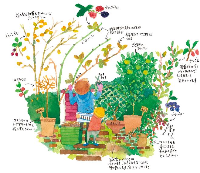 果樹の植え付けと収穫