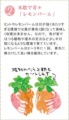 ミントやレモンバームは日が強く当たりすぎる環境では葉が黄色く固くなって美味しく収穫出来ません。なので、我が家ではつる植物や灌木の足元など少し半日陰になるような環境で育てています。レモンバームは2~3年に1回、春先に株分けして良い株を維持しています。
