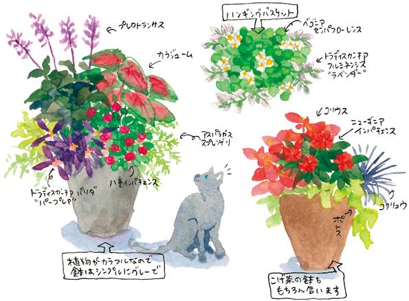 熱帯植物でトロピカルな寄せ植えを楽しむ