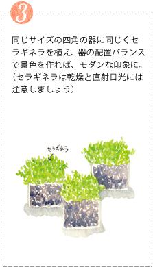 同じサイズの四角の器に同じくセラギネラを植え、器の配置バランスで景色を作れば、モダンな印象に。(セラギネラは乾燥と直射日光には注意しましょう)