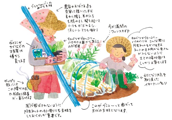 秋も庭で家庭菜園!